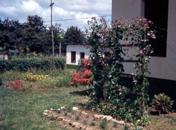 Mom's first African garden